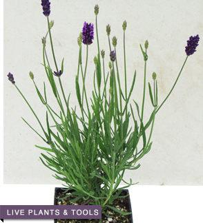 Live Plants & Supplies